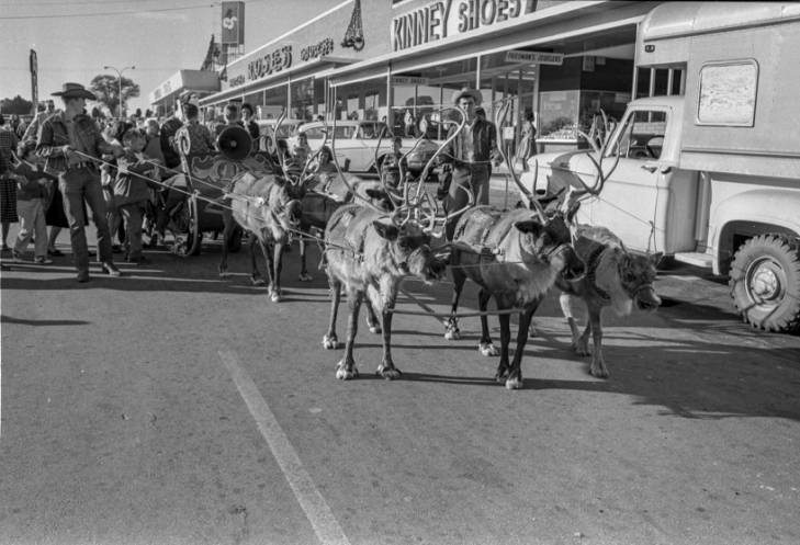 Reindeer and sleigh at the Midlands Shopping Center