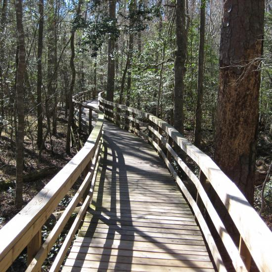 Boardwalk through Congaree National Park